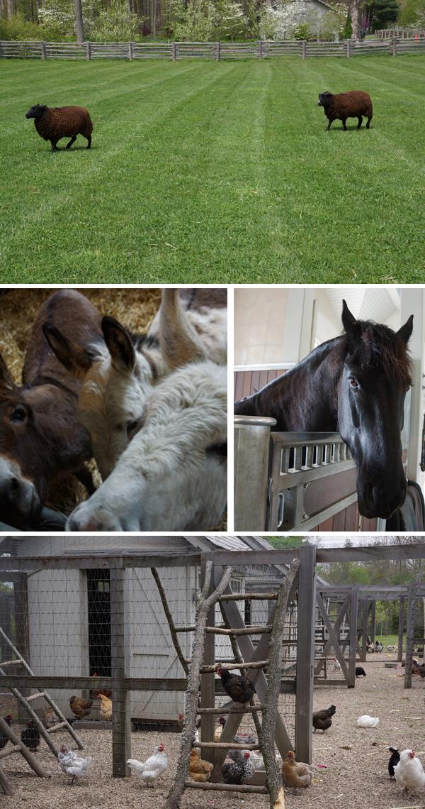 Martha-Farm