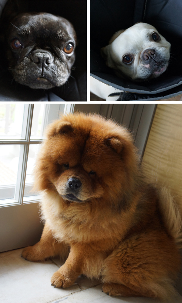 Marthas-Dogs
